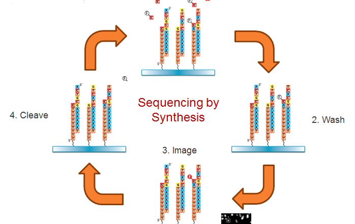 The Evolution and Future of True Single Molecule Sequencing
