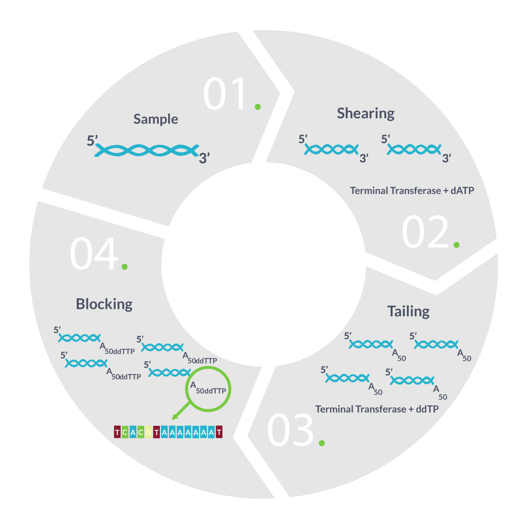 seqll-rna-sample-loading-graphic-f2